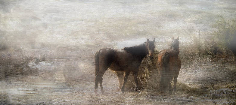 Early Morning Meal by Kathy Jennings