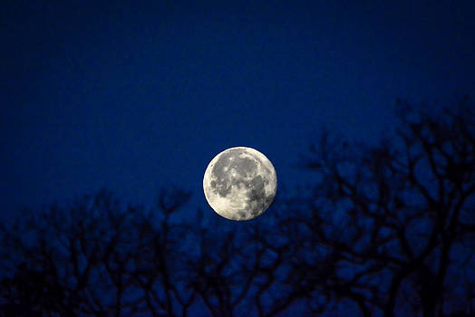 Early Morning Moon by Shey Stitt