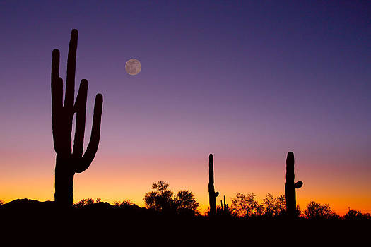 James BO  Insogna - Early Morning Southwest USA Desert Moon Glow