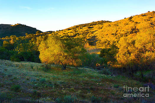 Early Morning Western Landscape by Timothy OLeary
