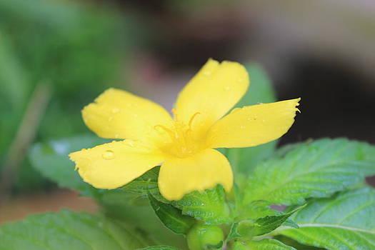 Early-Season Flowers Garden by Subesh Gupta