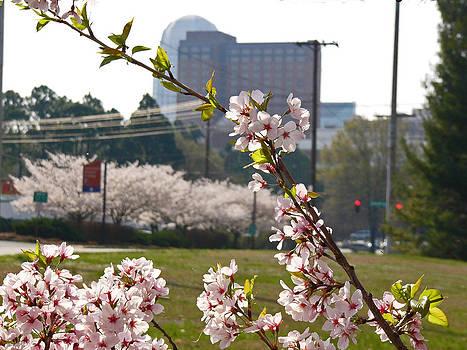 Early Spring in Winston-Salem by Deborah Willard