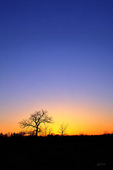 Early Spring Oak at Sunset by Ed Cilley