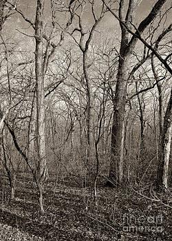 Steven Ralser - Early Spring