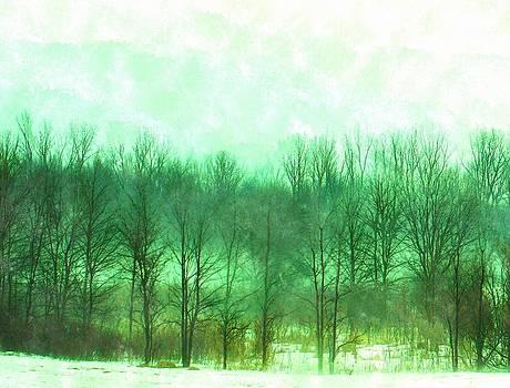 Rosemarie E Seppala - Early Spring Woodlands In Fog