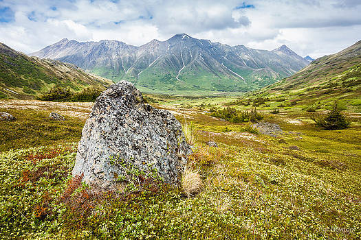 Early Summer in the Chugach by Tim Newton