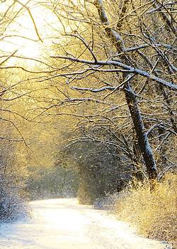 Early Winter Snow by Lori Frisch