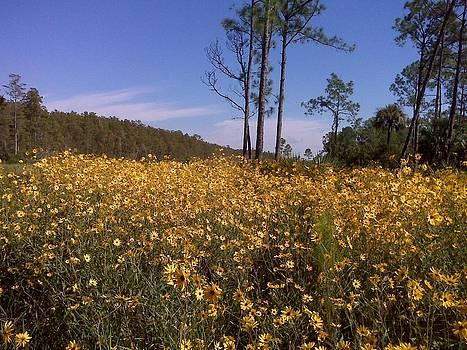 East Coast Dune Sunflowers by K Simmons Luna