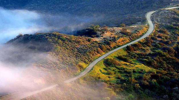East Topanga Fire Road by Catherine Natalia  Roche