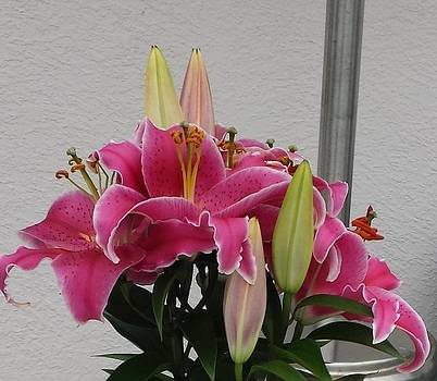 Easter Lillies 2014 by Linda Tyson