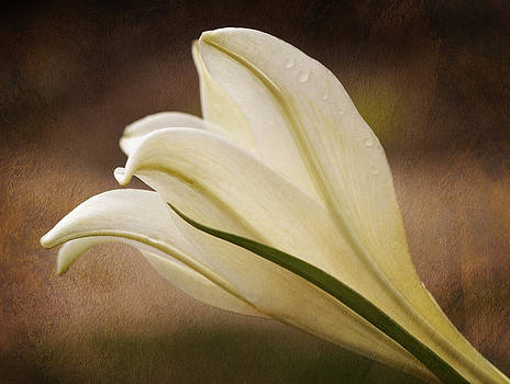 Easter Lily Beauty by Liz Mackney