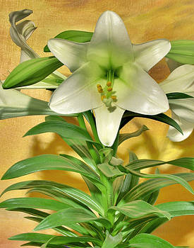 Brian King - Easter Lily HDR