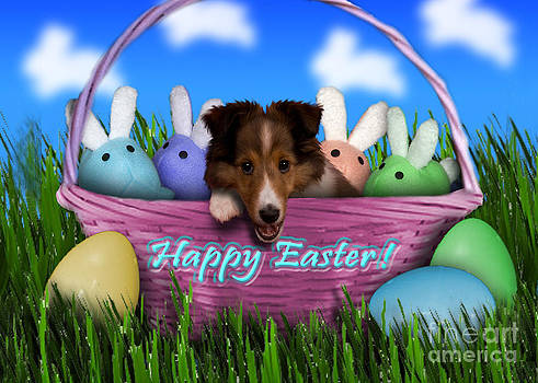Jeanette K - Easter Sheltie Puppy