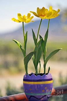 Easter Tulips  by Juls Adams