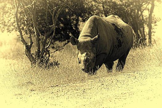 Stephen Barrie - Eastern Black Rhino