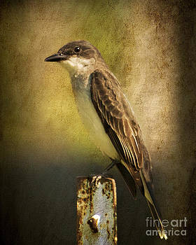 Eastern Kingbird Portrait by Pam  Holdsworth