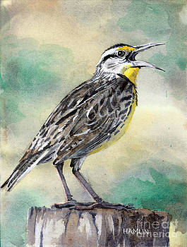 Eastern Meadowlark by Steve Hamlin