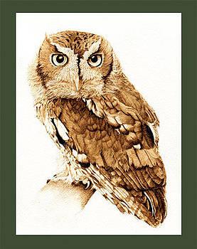 Eastern Screech Owl by Cate McCauley