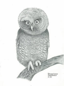 Eastern Screech Owl by Sharon Blanchard