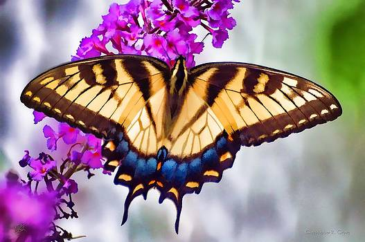 Eastern Tiger Swallowtail by Christopher Grove