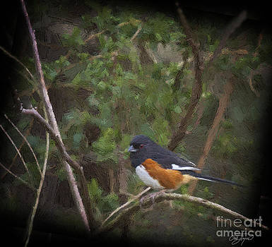 Cris Hayes - Eastern Towhee in Oil