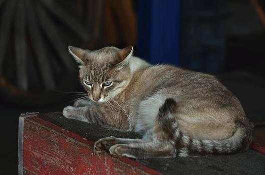 Kae Cheatham - Easy Going Barn Cat