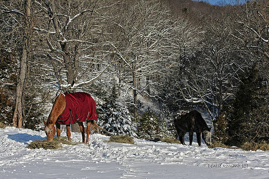 Eating Hay in the Snow by Denise Romano