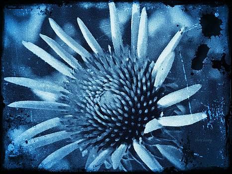 Chris Berry - Echinacea