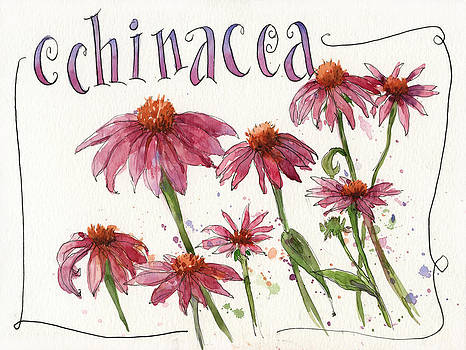 Echinacea by Leslie Fehling