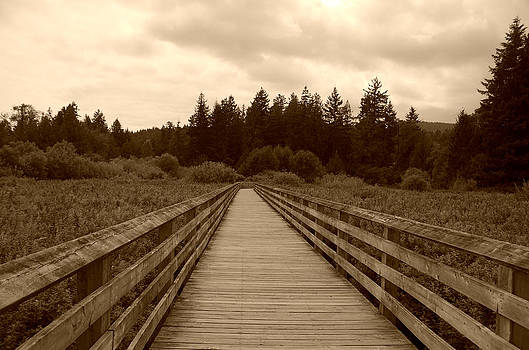 Marilyn Wilson - Ed Nixon Trail Boardwalk - sepia