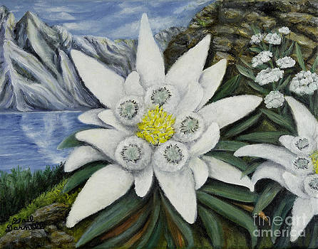 Edelweiss with Mountain View by Gail Darnell