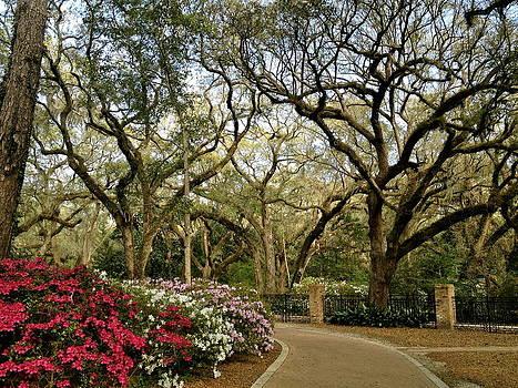 Eden Gardens State Park by Chance Jobe