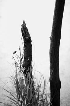 Edge Of A Pond by Ian Wilson