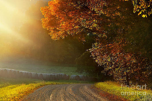 Edge of Light by Sandra Silva