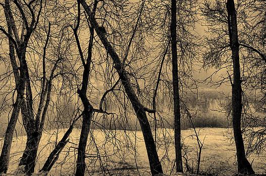 Edge of Winter by Bob Orsillo
