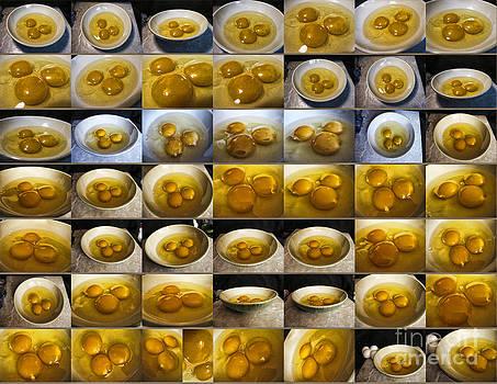 Anne Ferguson - Eggs Eggs Eggs Eggs Eggs