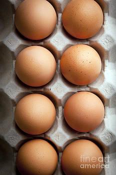 Tim Hester - Eggs