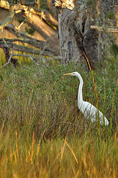 Egret and Deer on Jekyll Island by Bruce Gourley