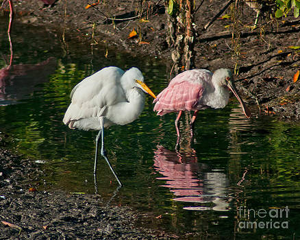 Stephen Whalen - Egret and Pink Spoonbill
