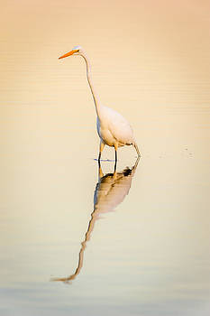 Egret at Dusk by Chris Modlin