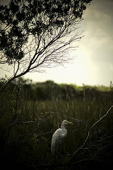 Egret At Sunset by Bradley R Youngberg