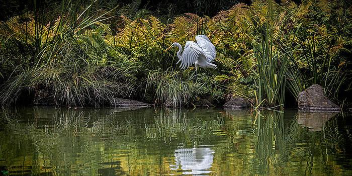Chris Lord - Egret At The Lake