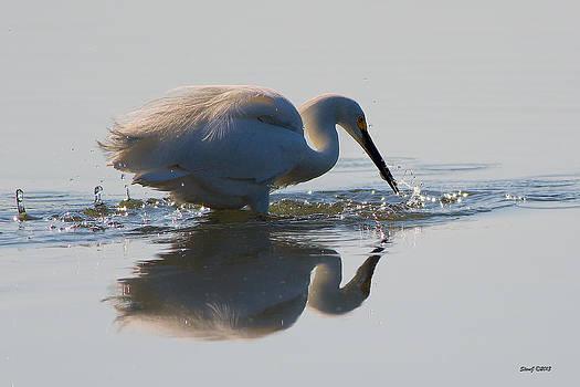 Egret Captures a Fish by Stephen  Johnson