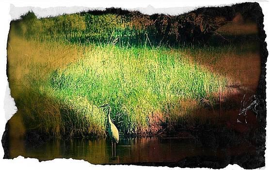 Daryl Macintyre - Egret