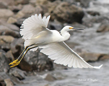 Deborah Hughes - Egret Flight