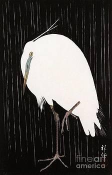 Roberto Prusso - Egret In the Rain