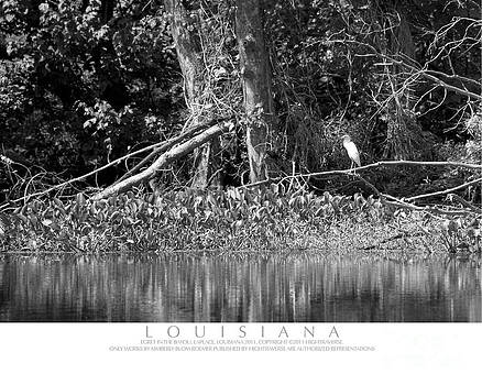 Egret in the Swamp by Kimberly Blom-Roemer