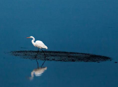 Egret On Mud Flat by Phil Mancuso