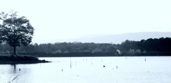 Nina Fosdick - Egret over the lake