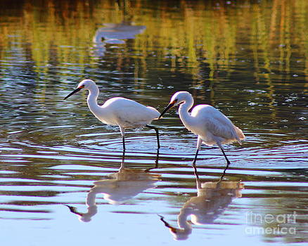Egret Pair by Andre Turner
